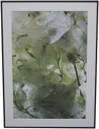 Frozen White Bougainvillea - framed